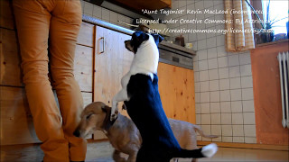 Jumping Jack - Barbara's Animal World
