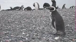 pinguino rodriguez