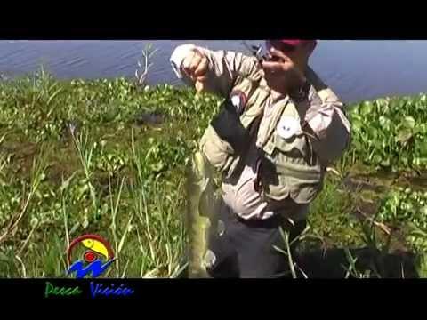 PESCA DE GRANDES TARARIRAS EN SAN PEDRO! POR DAVID DAU