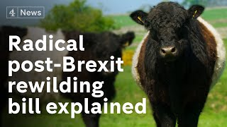 Rewilding Brexit Britain: the radical shake-up of Britain's farming