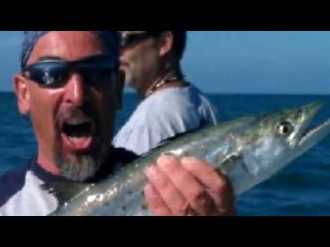 Sarasota Siesta Key Shark Fishing! Barracuda, Mackerel, watch it!