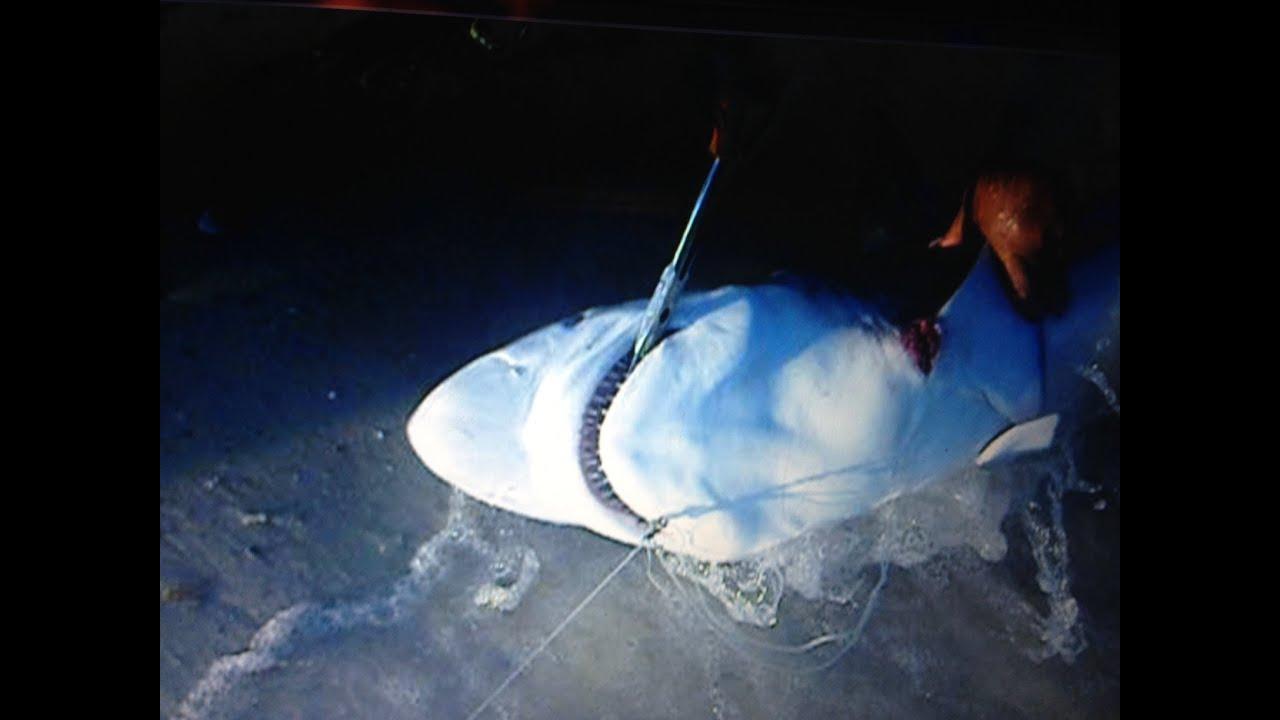 Huge 7 feet shark sharp tiburon cape san blas for Cape san blas fishing report