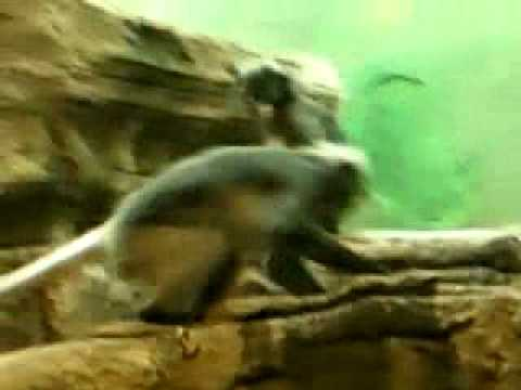 Monkey Porn.mp4 video