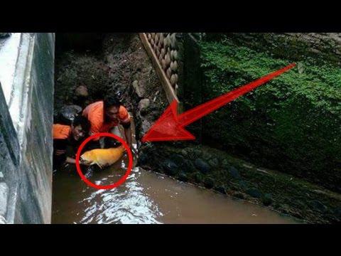 Aneh !!! Pekerja ini temukan ikan yg