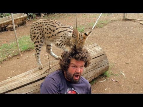 Wild Cat Loves Cameraman's Hair | Crazy Cameramen Ep06