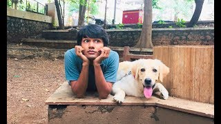 DOG SHORT FILM | MY FRIEND POCKET | LABRADOR RETRIEVER  || MOHAK MEET