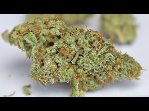 """Alien Orange Cookies"" - (Strain Review)"