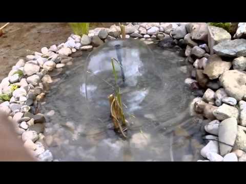 Rasadnik Panić-fontana(Fountains Nursery Panic) - 1