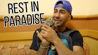 My Last Day With My Puppy. (Rest in Paradise) by : fouseyTUBE