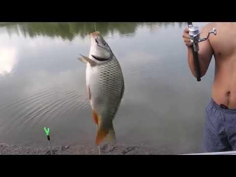 Рыбалка в алматы, ТЭЦ
