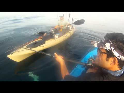 Fishing Diaries 16- La Jolla Kayak Fishing - 30lb Halibut