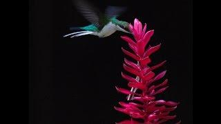 Kara Sun birding in Guatemala -Tikal (Part 1)