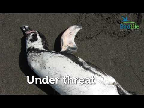 Protect A Penguin Today