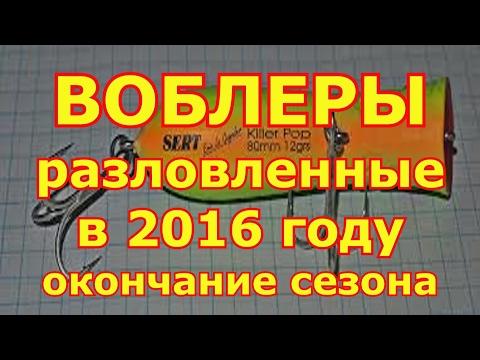 десятка воблеров в 2016 году