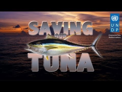 Saving Our Tuna - UNDP