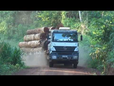 Galera da madeira Axor 3340 carregado de toras  vindo do manejo MT