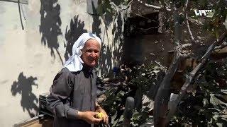 رجل ثمانيني يقلّم أشجار الزيتون منذ سبعين عاماً في ريف عفرين