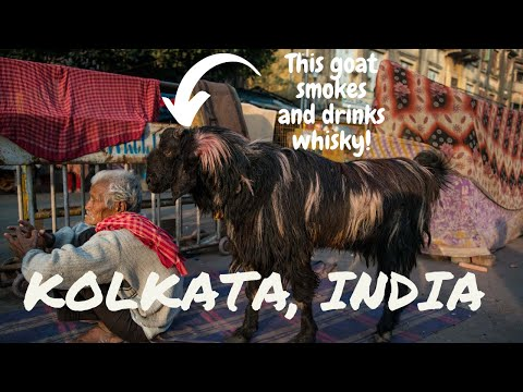 The Cigarette Smoking, Whisky Drinking Goat Of Kolkata, India