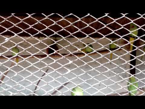 Nehru zoo park big parrots