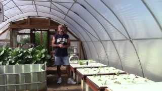 Organic Hydroponic Fertilizer Experiment Nov 2013