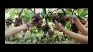 Aagathan - Munthiri Poovin - Aagathan Malayalam movie