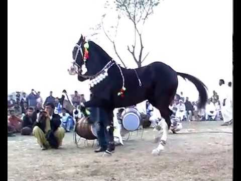 Harchahal Horse dancing maila sakrila sarai alamgir March 2012.part 2/3