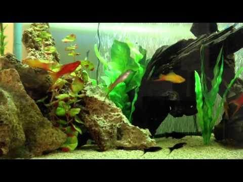 60 Gallon Tropical Freshwater Aquarium Youtube
