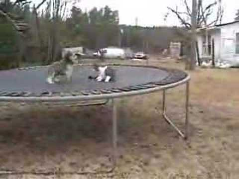 Cat vs Silly Dog Play Fight Race