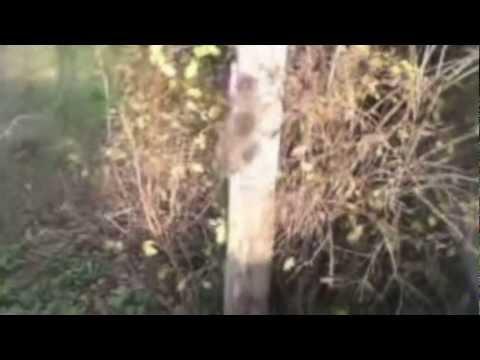 Video divertente gatto pazzo che scende da un albero