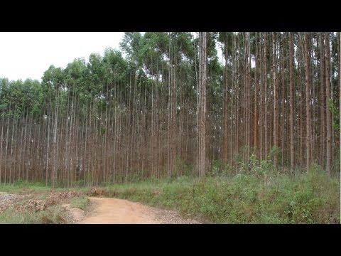 Clique e veja o vídeo Curso Reposição Florestal - Áreas Erodidas