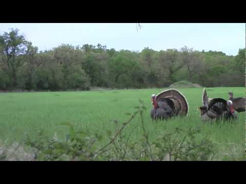 TURKEY HUNTING OKLAHOMA WITH TEAM REALTREE MEMBER JEREMY BOX IN  2010