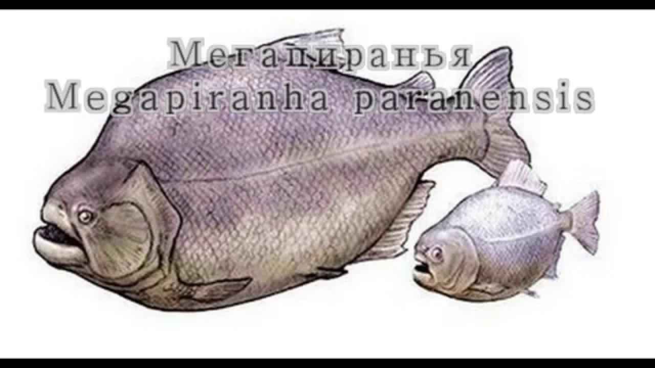 Mega piranha prehistoric