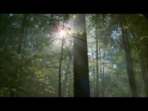 200 subs video- Nature- Rök_Finntroll