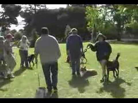 Dog Training Class San Leandro CA by The Dog Squad