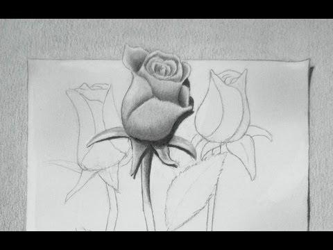 Cómo dibujar una rosa en 3D - Dibujando rosas