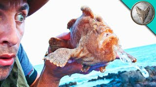 MONSTER FROGFISH FOUND!