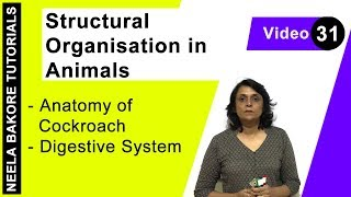 Structural Organisation in Animals - Anatomy of Cockroach - Digestive System