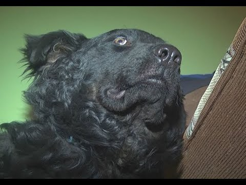 В Нижнекамске собака, которую хоронили всем домом, восстала из мертвых