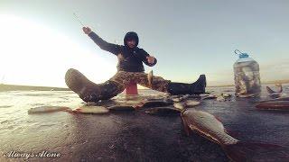 Первая рыбалка 2017 года. Оттепель. Бешеный клёв (окунь, плотва, красноперка).