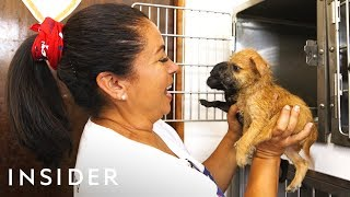 Organization Rescues Abandoned Dogs From Puerto Rico