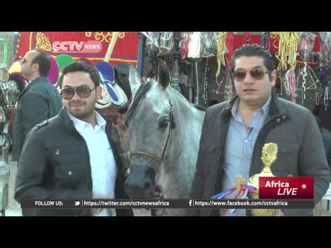 Egypt Hopes Horse Equestrian Festival Will Boost Tourism