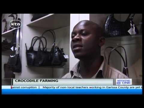 How crocodile farming is helping Zimbabwes economy grow