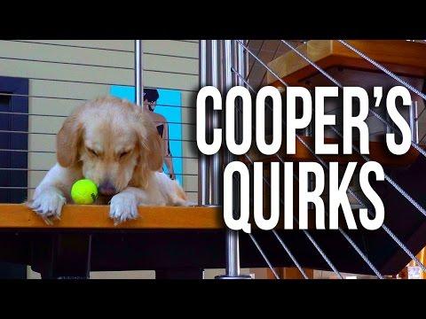 Crazy Golden Retriever Habits (Super Cooper Sunday #91)