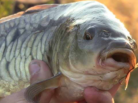 Супер рыбалка на КОРМАЧКИ(Дневник рыболова)
