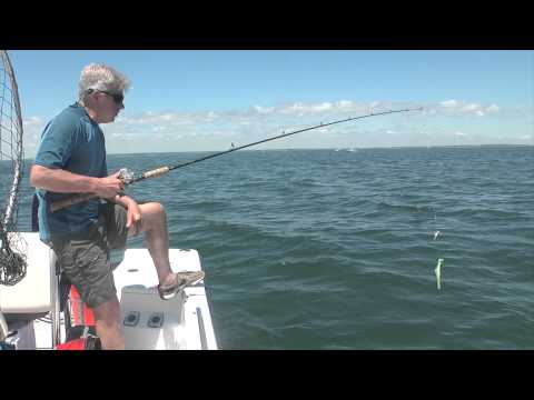 Buzzards Bay Black Sea Bass Fishing