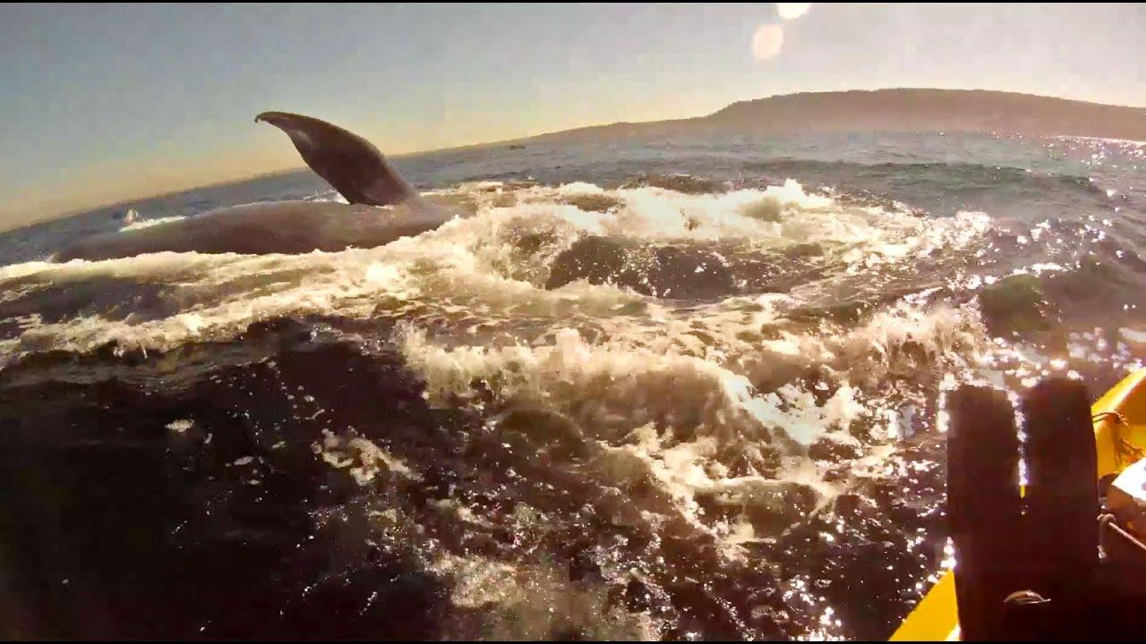 Mientras remaba en su kayak se le acercaron unas ballenas azules