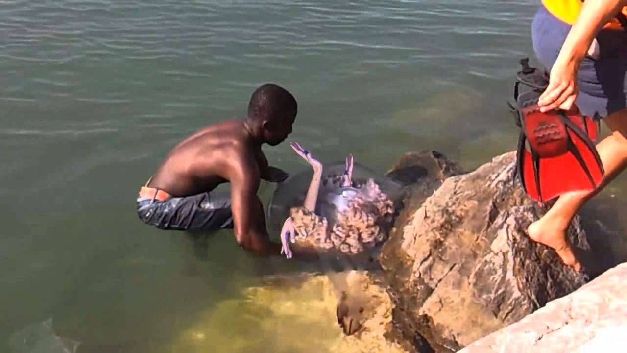 Sirenas Reales Encontradas