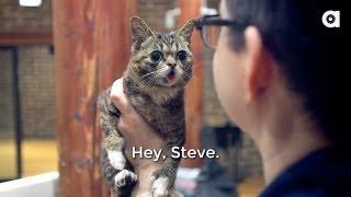 Lil BUB's Big SHOW Episode 3: STEVE ALBINI