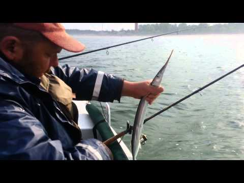 видео как ловят саргана