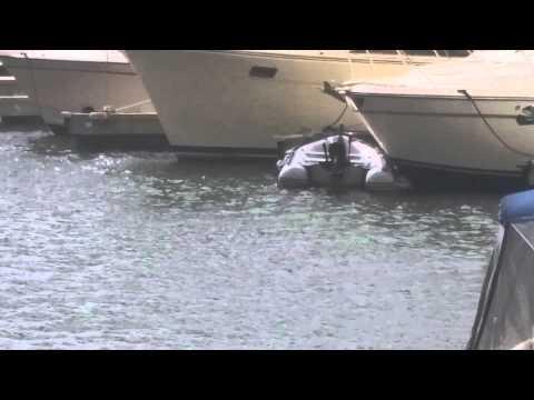 Note 4 Camera Sample: Baltimore Seagull Eats Fish